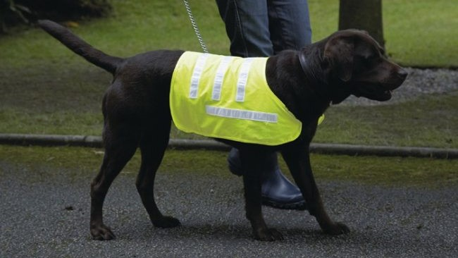 Reflective Dog Coat by Canine Concepts