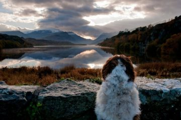 Customer Stories | Dales Dog Walking